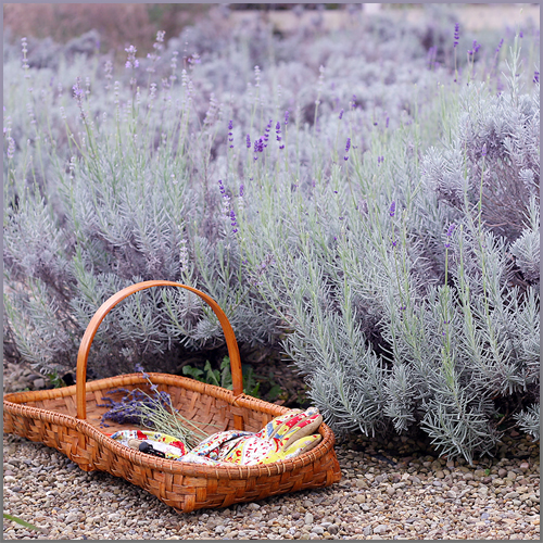 Lavender Farm Tours at Lavender Green - Knox, Clarion County, PA